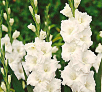 Kennen Sie die Blume Ihres Geburtsmonats?