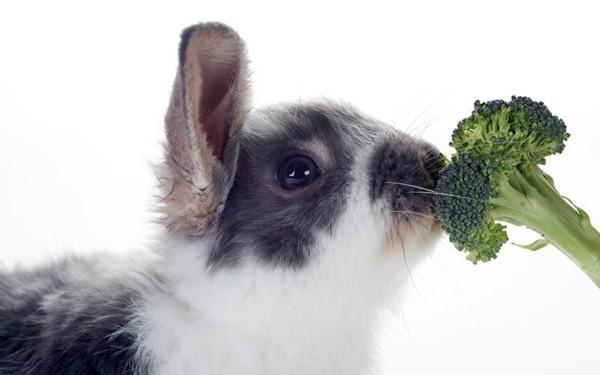 Brokkoli roh essen Schale Nährstoffe Hase