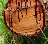 Drachenblut: Kennen Sie das Naturheilmittel Sangre de Drago und seine Wirkung?