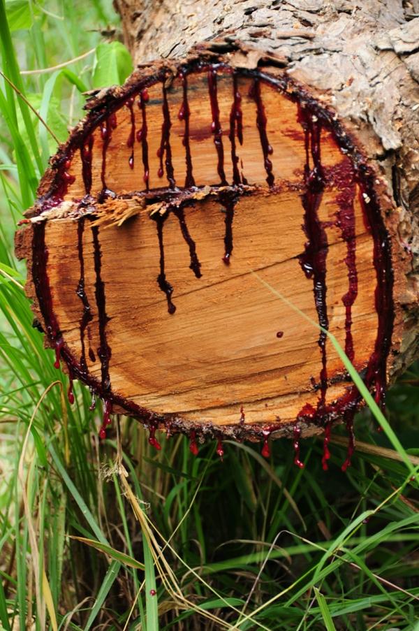 Drachenblut Drachenbaum Harz Wirkung