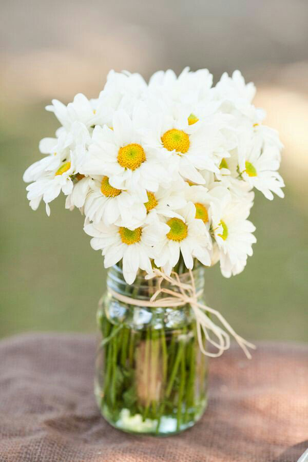 Geburtsmonat passende Blume im Glas noch kleine Margeriten genannt bringen den Frühling ins Haus