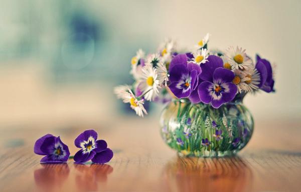 Geburtsmonat passende Blume lila Veilchen weiße Gänseblümchen im Glas schöner Anblick