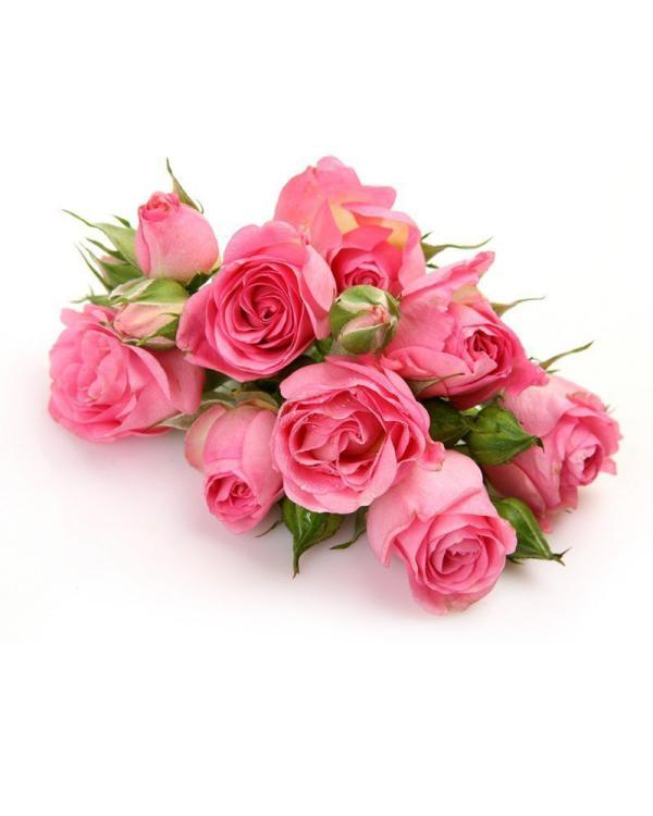 Geburtsmonat passende Blume rosafarbene Rosen ein Symbol weiblicher Jugend und Schönheit