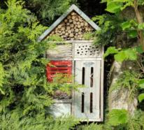 Nützlinge im Garten für eine natürliche und gesunde Gartengestaltung