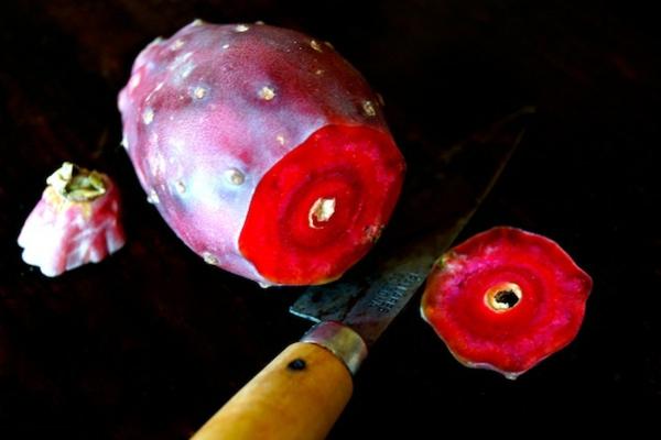 Kaktusfeige essen Methode Kaktusfrucht Feigenkaktus Opuntie