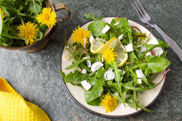 Kulinarische Löwenzahn Anwendung Frühlingssalat grüne Löwenzahnblätter gelbe Blüten Zwiebel kleine Käsestückchen