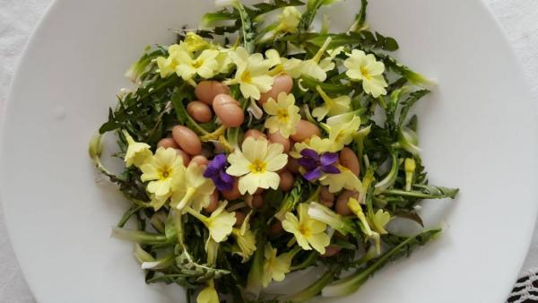 Kulinarische Löwenzahn Anwendung Frühlingssalat zu Ostern grüne Blätter Eier essbare Blüten