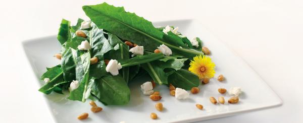 Kulinarische Löwenzahn Anwendung frischer Salat Löwenzahnblätter Nüsse kleine Käsestückchen