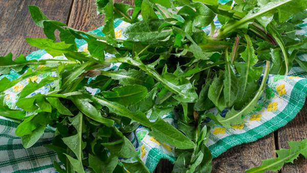 Kulinarische Löwenzahn Anwendung grüne Löwenzahnblätter sammeln waschen klein schneiden