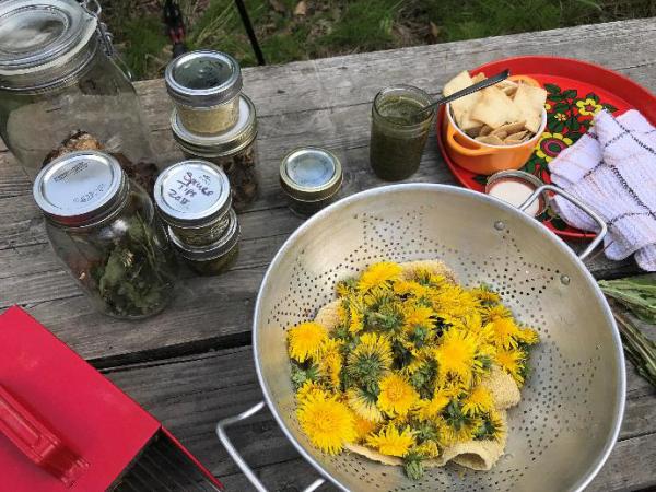 Kulinarische Löwenzahn Anwendung verschiedene Zubereitungsmöglichkeiten gelbe Blüten