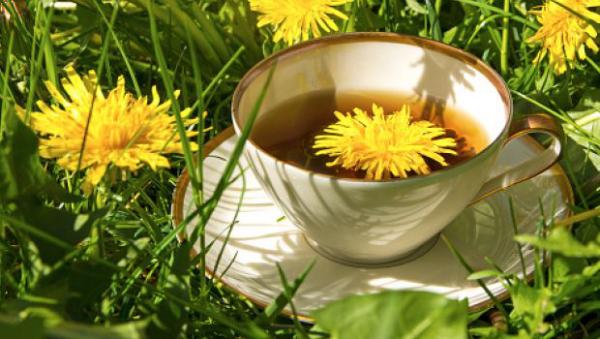 Löwenzahn Heilpflanze vielseitige Anwendung bei verschiedenen medizinischen Beschwerden Tasse Löwenzahntee im Gras gelbe Blüten