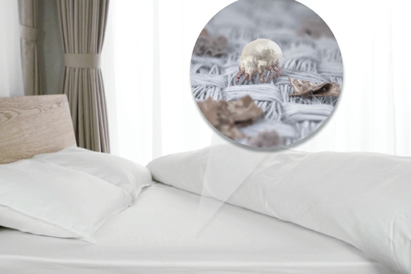 Milben im Bett Bettmilben bekämpfen Matzatze Allergien