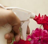 Was hilft bei Mehltau an Rosen? – 8 Mittel gegen Mehltau an Pflanzen