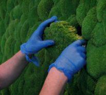Möchten Sie eine Mooswand in Ihrem Zuhause oder Garten haben?