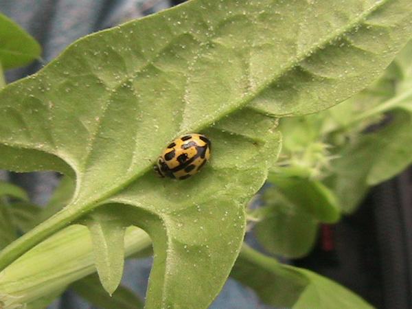 Naturgarten Insekten Ideen