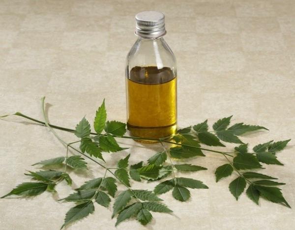 Neemöl Flasche Neembaum Blätter gesundheitliche Vorteile