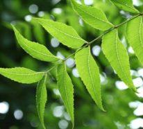 Neemöl – eine natürliche Quelle von Schönheit und Gesundheit