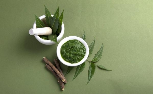 Neemöl Neembaum Blätter und Früchte gesundes Leben Niemöl