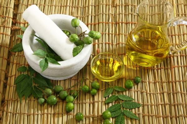 Neemöl Niemöl gesundes Leben Blätter und Früchte
