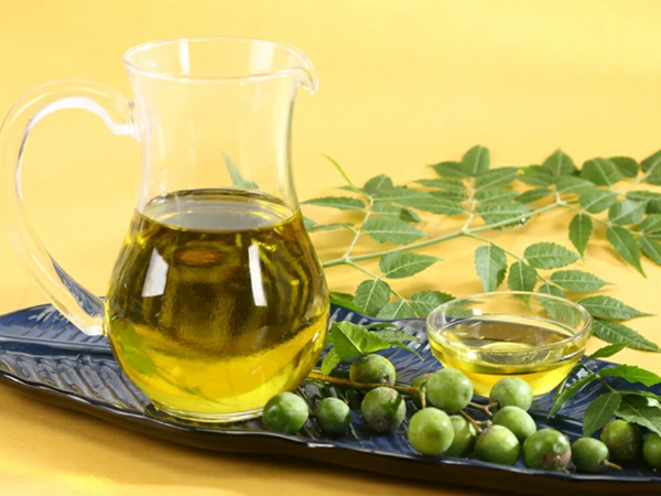 Neemöl herstelen Neembaum Blätter und Früchte