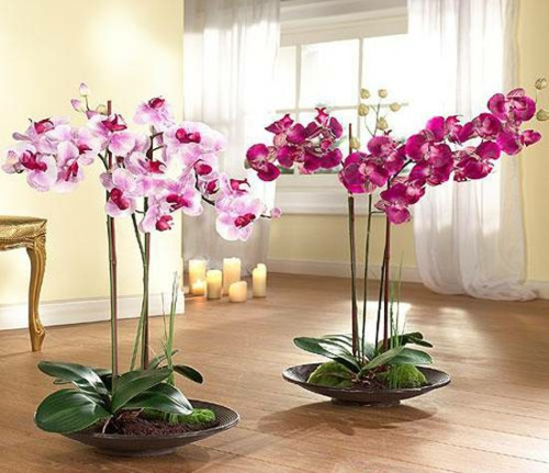 Tischdeko mit Orchideen edle Hausdekoration mit Zimerpflanzen