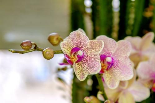 Tischdeko mit Orchideen edle Tischdekoration Orchideenblüten