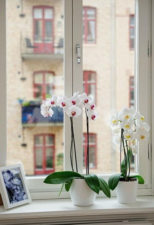 Tischdeko mit Orchideen festliche Hausdekoration am Fensterbrett