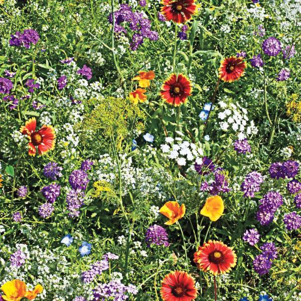 gesund Leben Nützlinge im Garten Naturgarten