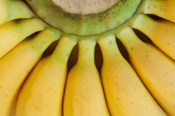 magenschonendes essen obst und gemüse