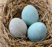 Osterdeko aus Beton – stimmungsvolle Bastelideen zu Ostern mit Anleitung