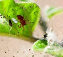 Wie kann man Spinnmilben bekämpfen? – einige nützliche Tipps und Tricks