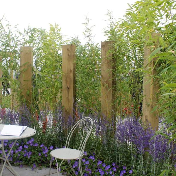 Bambus Garten Ideen Bambushecke