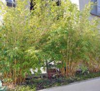 7 Vorteile der Bambushecke und wie Sie diese effektiv als Sichtschutz nutzen