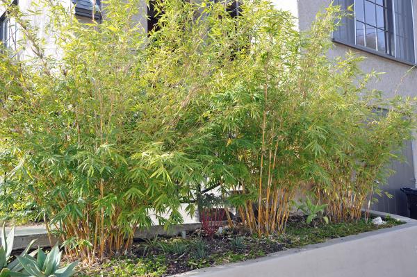 Bambushecke Hochbeet Bambus Garten Ideen