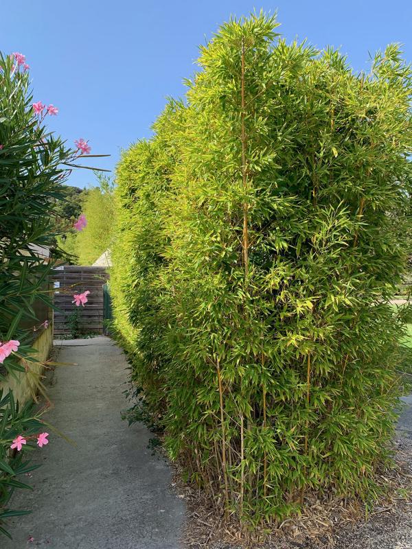 Bambushecke Privatschutz sichern