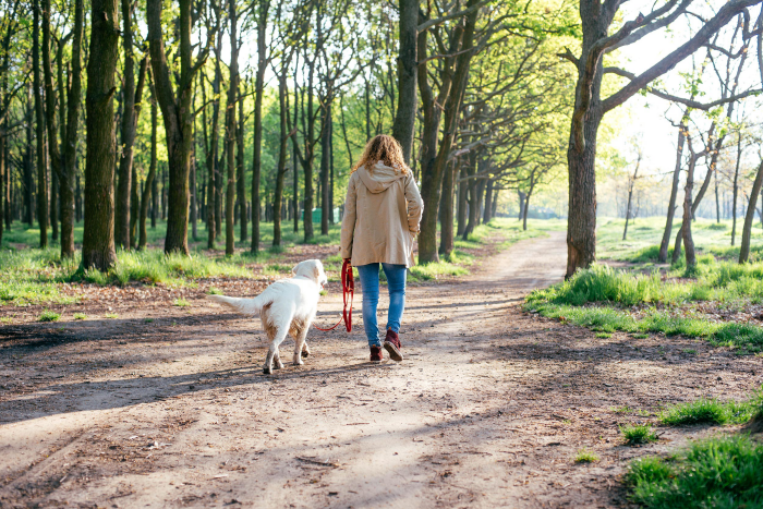 Corona-Krise und Hunde junge Frau Hund langen Spaziergang im Wald machen