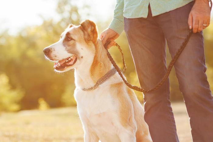 Corona-Krise und Hunde kein Grund für Panik Hund Herrchen Gassi gehen
