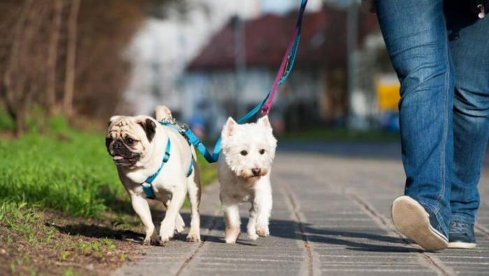 Corona-Krise und Hunde zwei Hunde Gassi gehen kein Virus übertragen