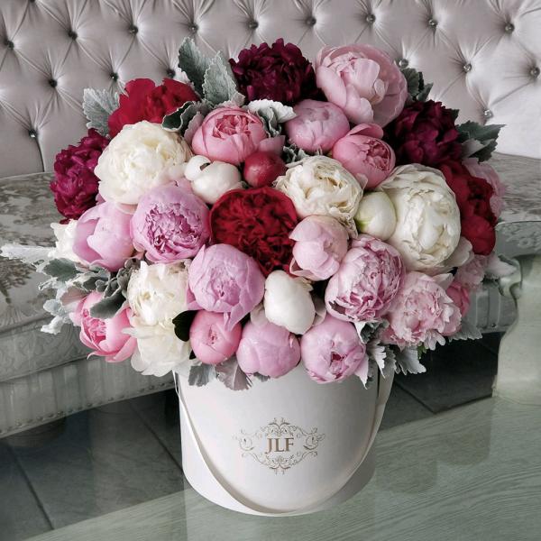 Ein Blumentopf - schöne Pfingstrosen