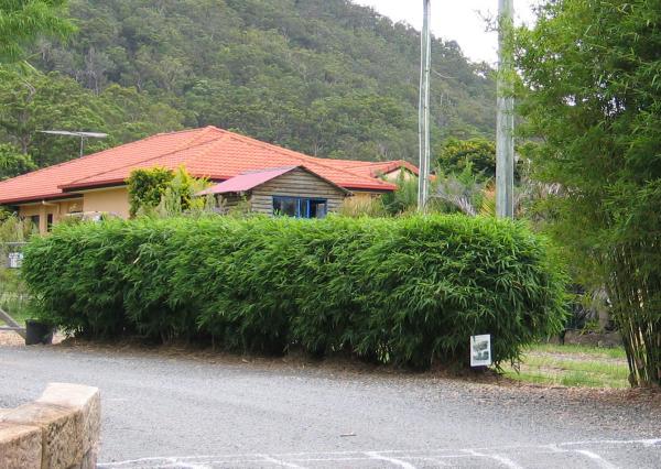 Gartenpflege Tipps Bambushecke