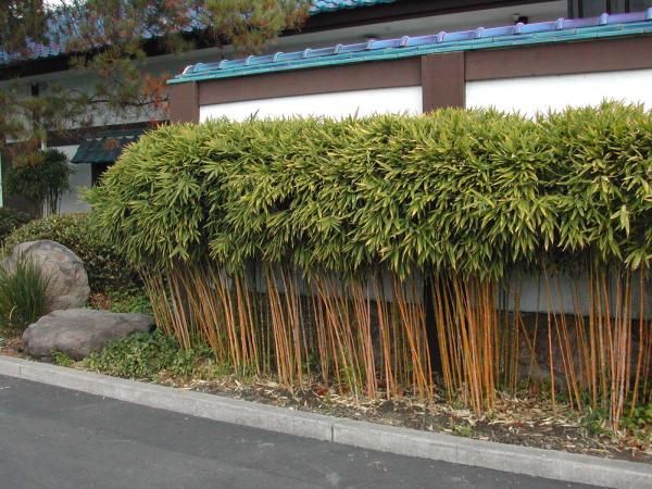 Haus ideen Garten gestalten Bambushecke