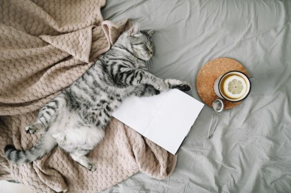 Hygge Trend Katze Buch Tee Ideen für mehr Gemühtlichkeit