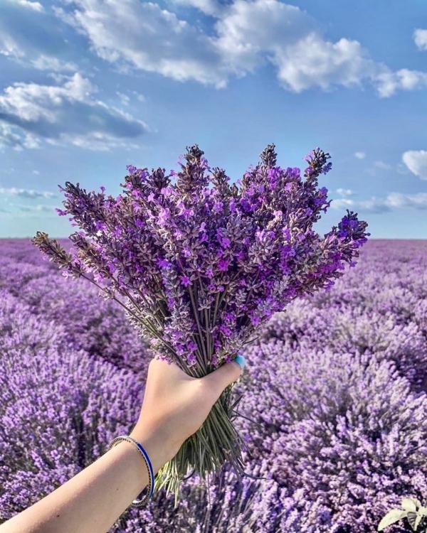 Lavendel schneiden wann Lavendel Strauß