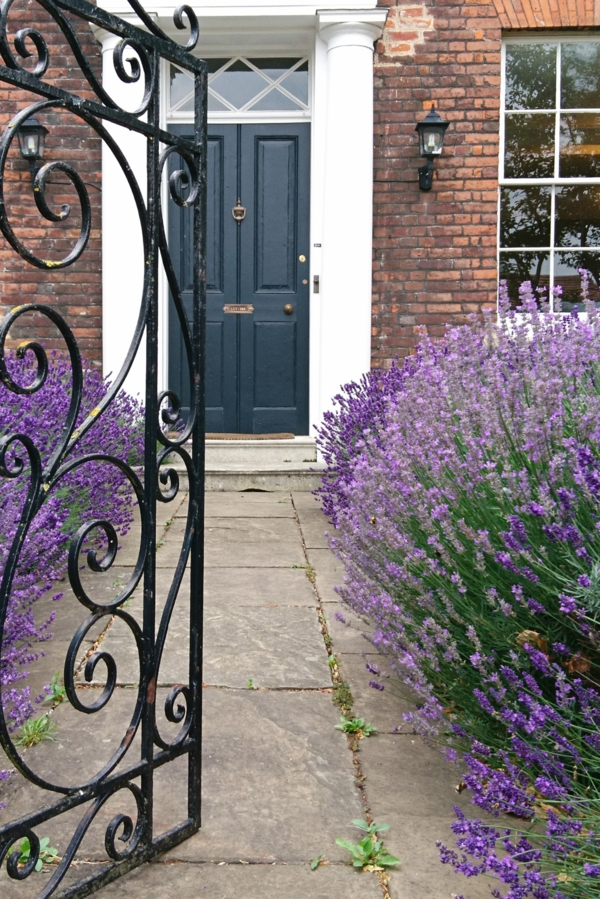 Lavendel schneiden wann Lavendel Vorgarten gestalten
