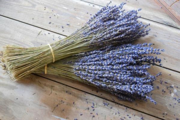 Lavendel schneiden wann Tipps Landelsorten