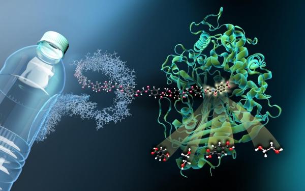 Mutiertes bakterielles Enzym zersetzt Plastikflaschen in Stunden bakterie frisst pet plastik abfall