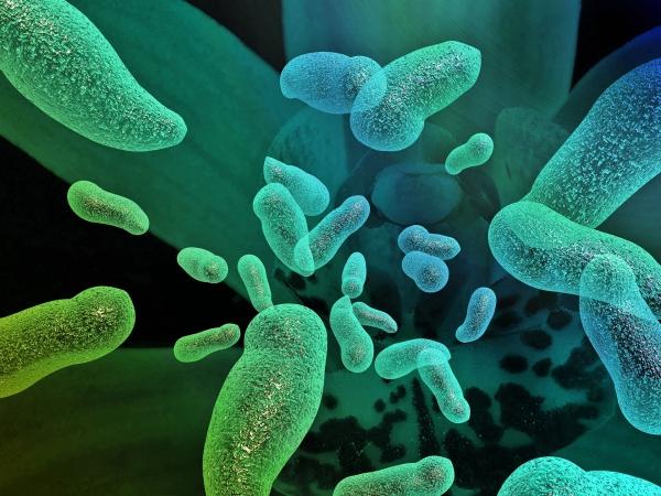Mutiertes bakterielles Enzym zersetzt Plastikflaschen in Stunden bakterie unter mikroskop grafik