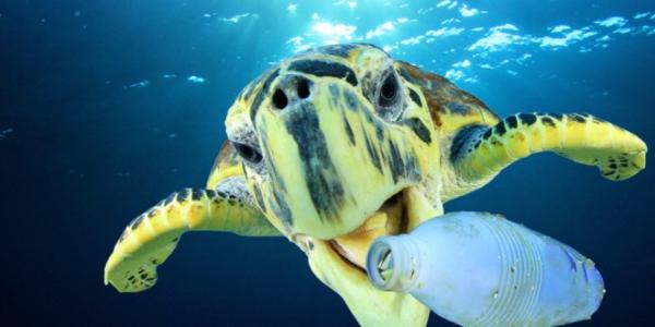 Mutiertes bakterielles Enzym zersetzt Plastikflaschen in Stunden plastik pet im ozean