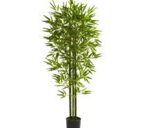 Bambus im Kübel – wann und wie macht das eigentlich Sinn?