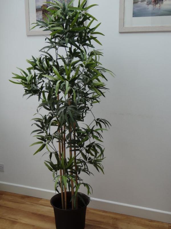 bambus im kübel wohnzimmer ideen